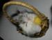 Le petit chat de belle Isle